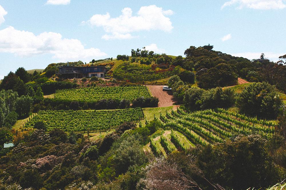 Плантации винограда разбросаны в разных регионах страны, вино получается с совершенно разными оттенками и вкусами
