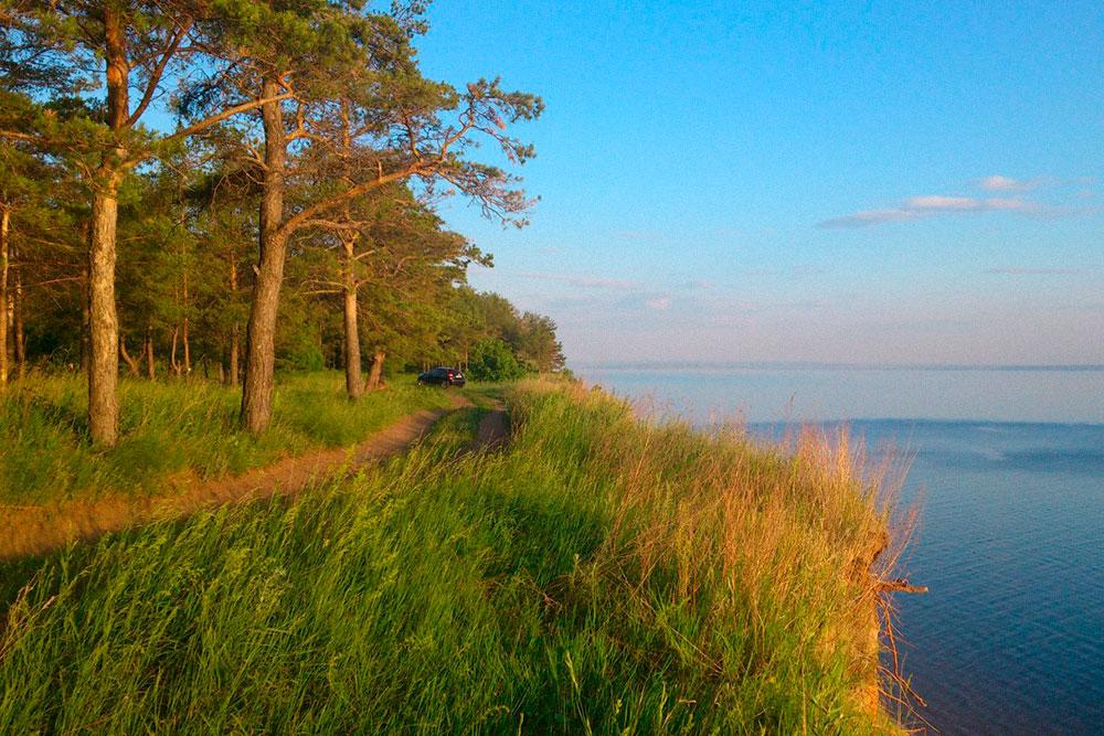 На левом берегу Волги растут хвойные деревья. Здесь обрывистые берега, но очень чистая вода. На глубине 1,5—2 м можно разглядеть дно