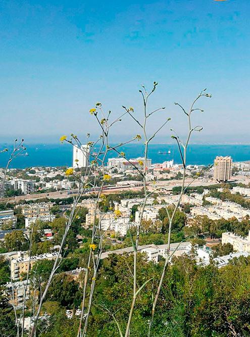 Вид на Хайфу с обзорной площадки