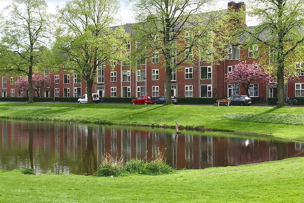 В одном из жилых кварталов Гронингена — сакура, пруд с корабликом и ярко-зеленая трава