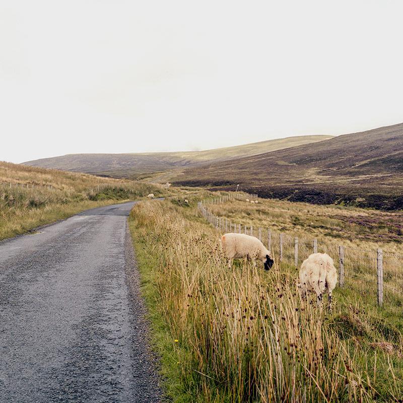На многих дорогах на острове Скай всего одна полоса. Разъехаться можно, если один водитель встанет в карман. Они расположены каждые 100—200 м. Это фото я сделал стоя в таком кармане. Следующий — сразу за дорожным знаком около трех овец вдалеке