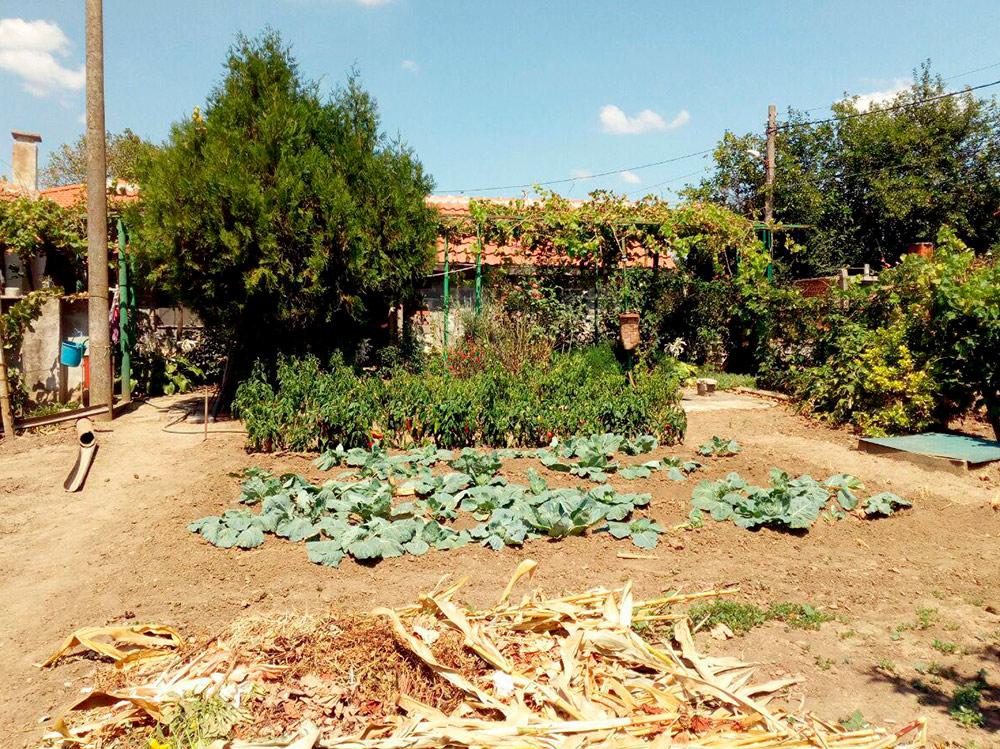 В болгарской деревне благодаря климату снимают по три урожая за сезон