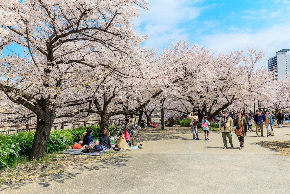 Токийцы в парке во время цветения сакуры. Она распускается в начале весны и опадает спустя несколько дней, не успев увянуть. Для японцев это символ любви к жизни, несмотря на всю ее суровость. Фото: Shutterstock