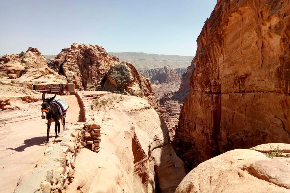 Ослик на вершине скалы, где находится монастырь Ад-Дэйр