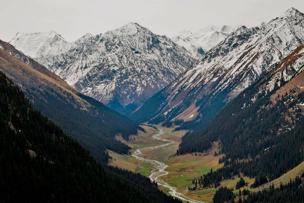 Дорога по ущелью Алтын-Арашан. В нем пасется много овец и лошадей, а еще растут высоченные тянь-шаньские ели