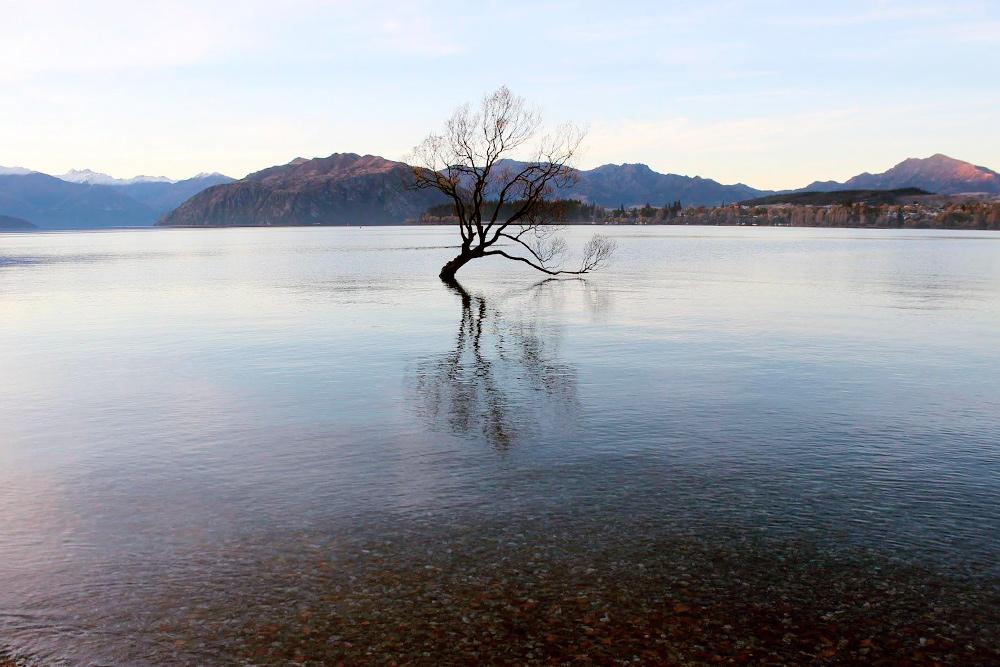 Дерево посреди озера Ванака. Мне кажется, это одно из самых фотографируемых деревьев в Новой Зеландии