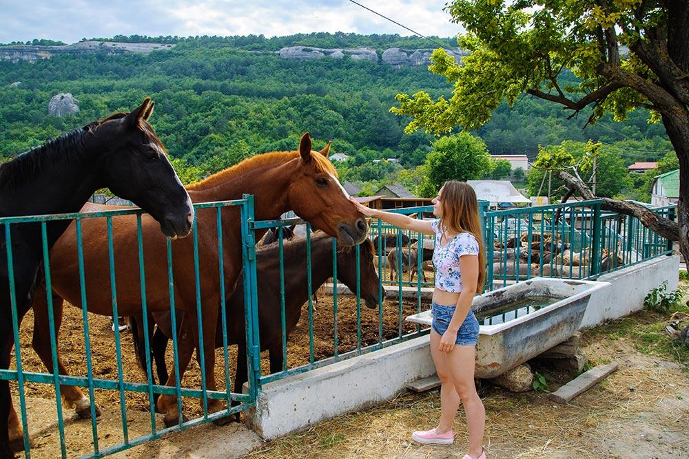 На ферме животные подходили сами и с любопытством нас разглядывали