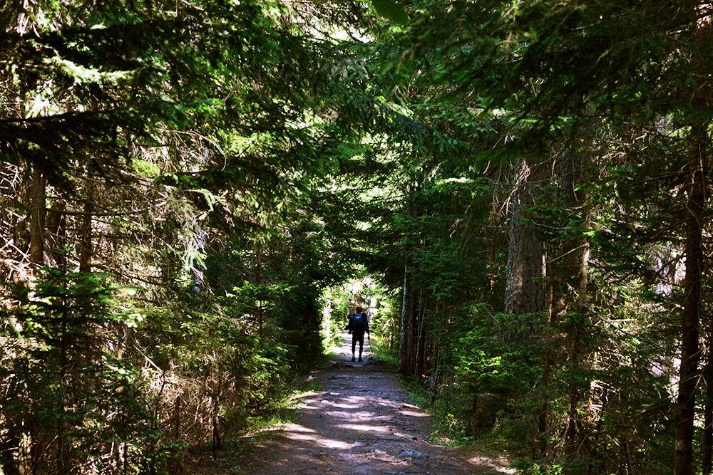 Туннель из хвойных деревьев на тропе в Швейцарии
