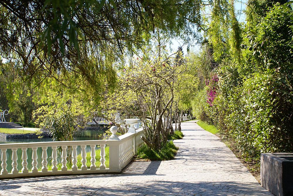 Парку «Южные культуры» 109 лет, здесь растет больше 3000 видов растений