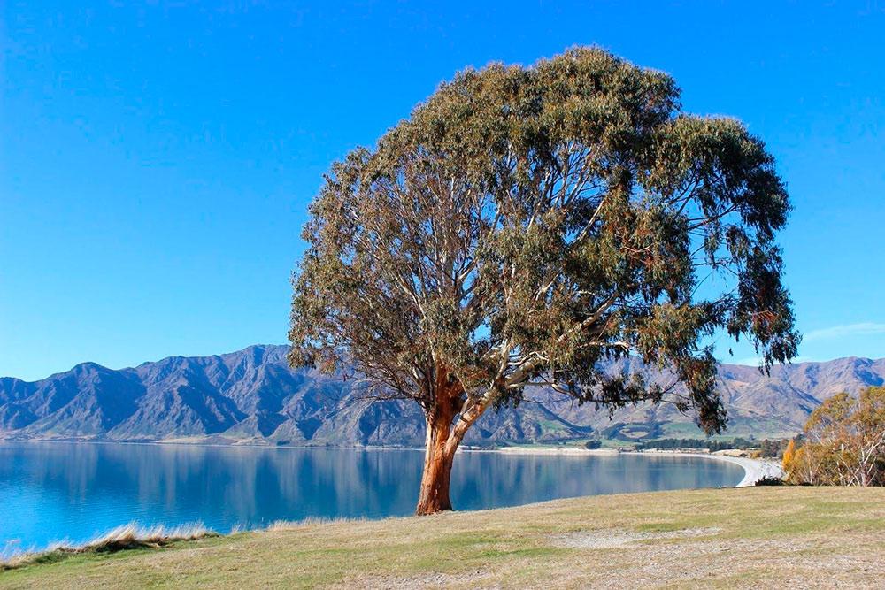 Конечная точка маршрута — озеро Хавеа. Это высокое дерево обозначено на картах как достопримечательность