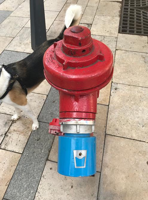 Как только в Будапеште становится жарко, на пожарные гидранты надевают специальные насадки, из которых можно пить воду