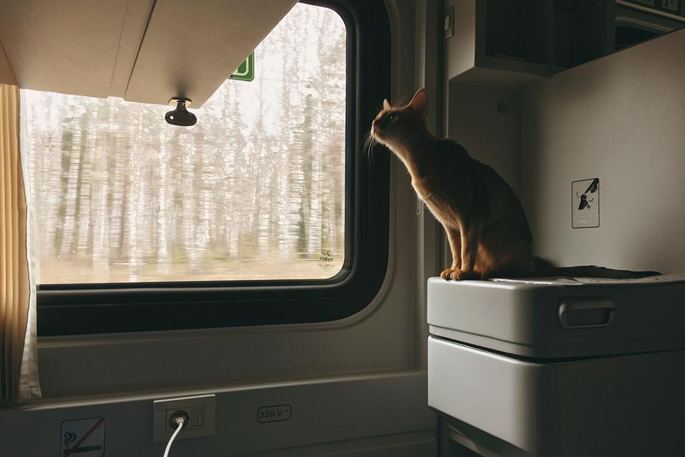 Ехать с кошкой в поезде в другую страну — когда еще такое испытаешь