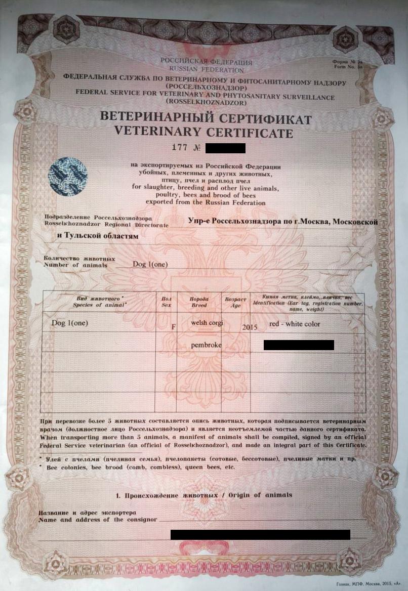Так как мы ехали через Беларусь, сертификат я получил заранее в ветеринарном пункте на Киевском вокзале. Очереди не было. Оформили за 30 минут. Врач проверил чип, поставил отметки о вакцинациях и заполнил основные пункты маршрута поездки