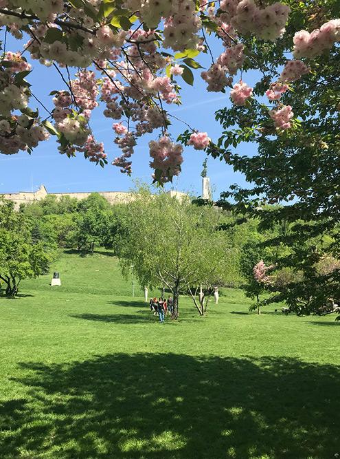 Парк на горе Геллерт — это большие лужайки с вековыми деревьями, изящными статуями и захватывающими видами на город