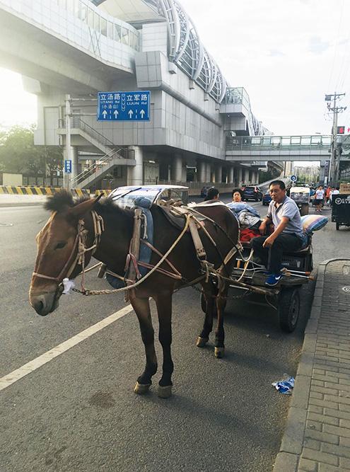 В центре города можно встретить и лошадь