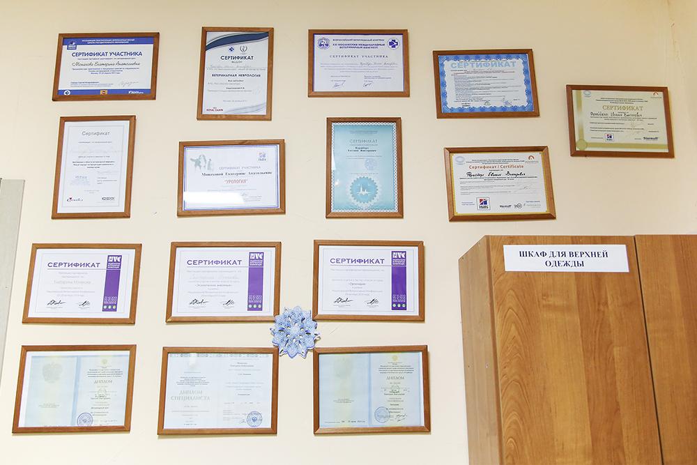 Стена с сертификатами о повышении квалификации — ветеринары постоянно учатся. Большинство клиентов на них не смотрят, но некоторые внимательно читают дипломы и расспрашивают врачей об их опыте