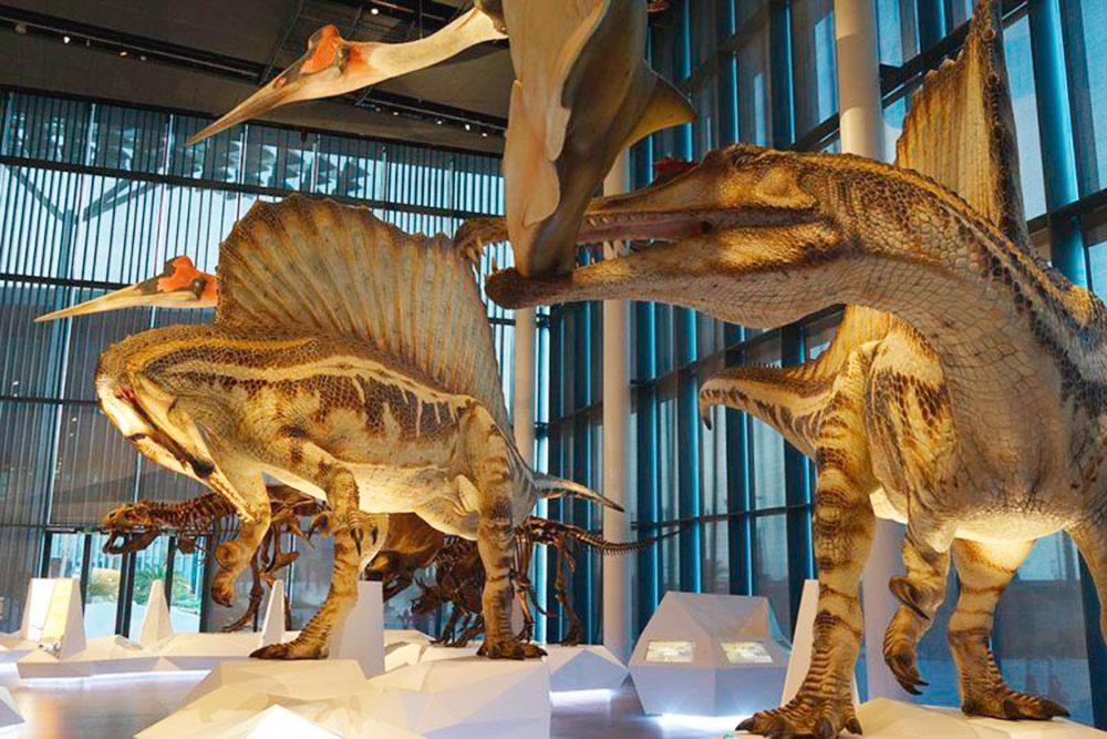 Экспозиция музея естественных наук