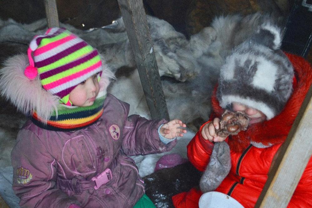 Малыши лакомятся олениной. Грызут копытце