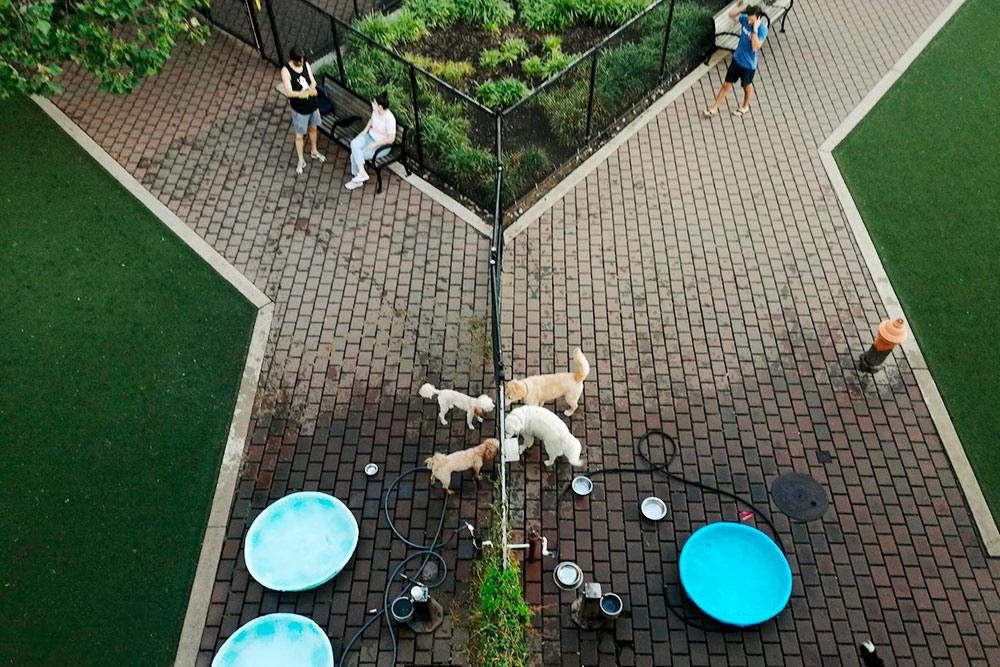 Собачий парк разделен на секции по размерам собак: на фото те, что побольше, справа, а поменьше — слева