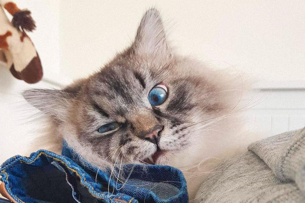 Кот пережил переезд легче всех