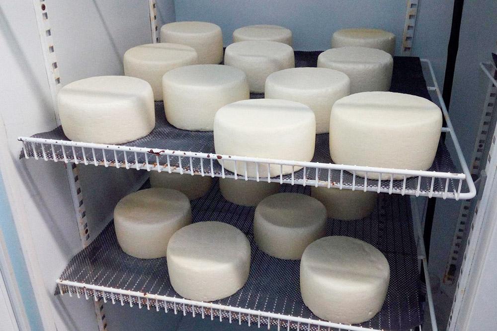 Это свежий сыр безвыдержки — «фреско». Чтобы пожелтеть, ему надо полежать две недели