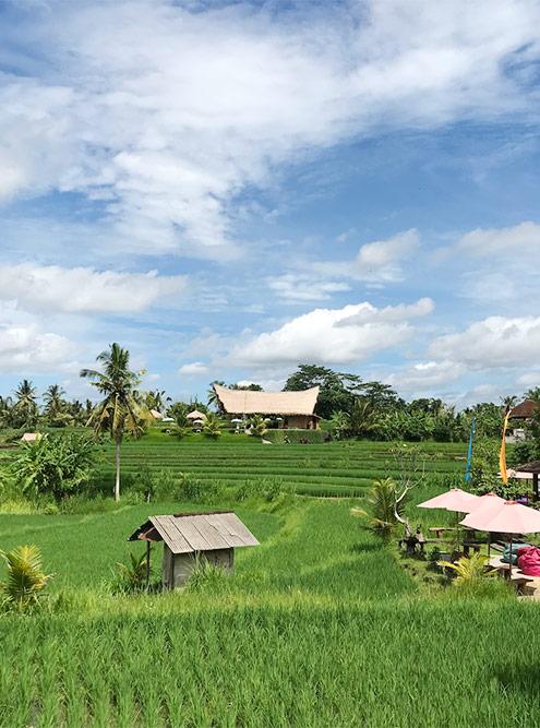 Вид на рисовые поля