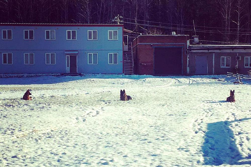 Тренируем выдержку: собака должна лежать, пока не скажешь «гуляй». Лайма ждет справа