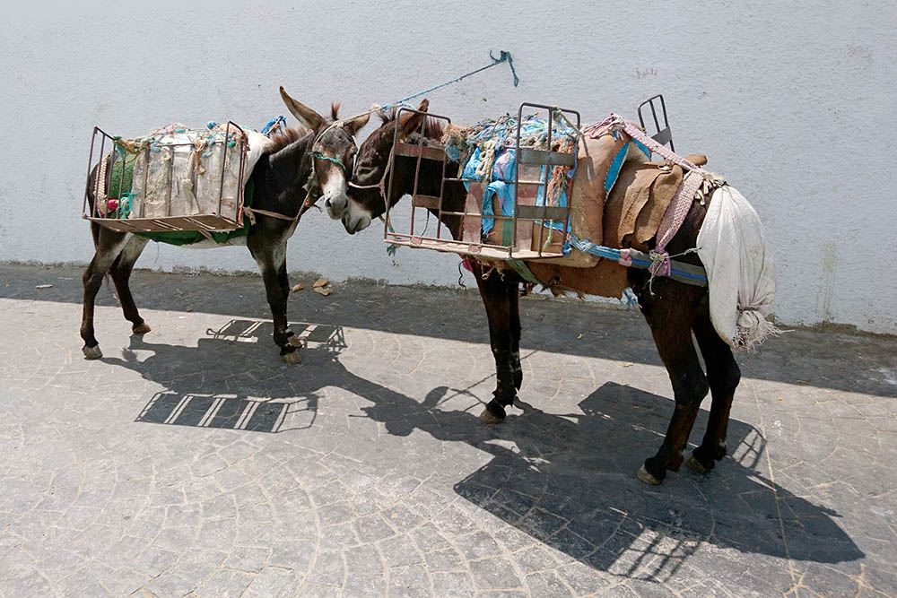 На таких осликах жители Тетуана перевозят вещи