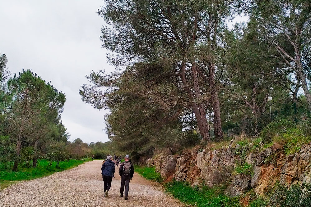 В парке шикарная природа: лес и горы расположены на берегу моря