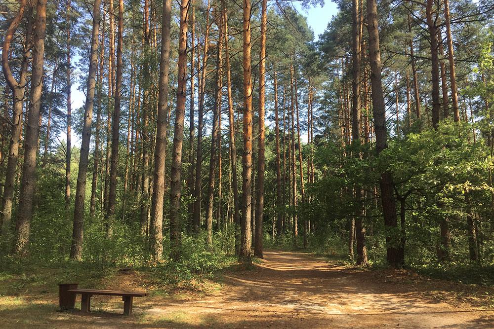 Кругом сосновый лес