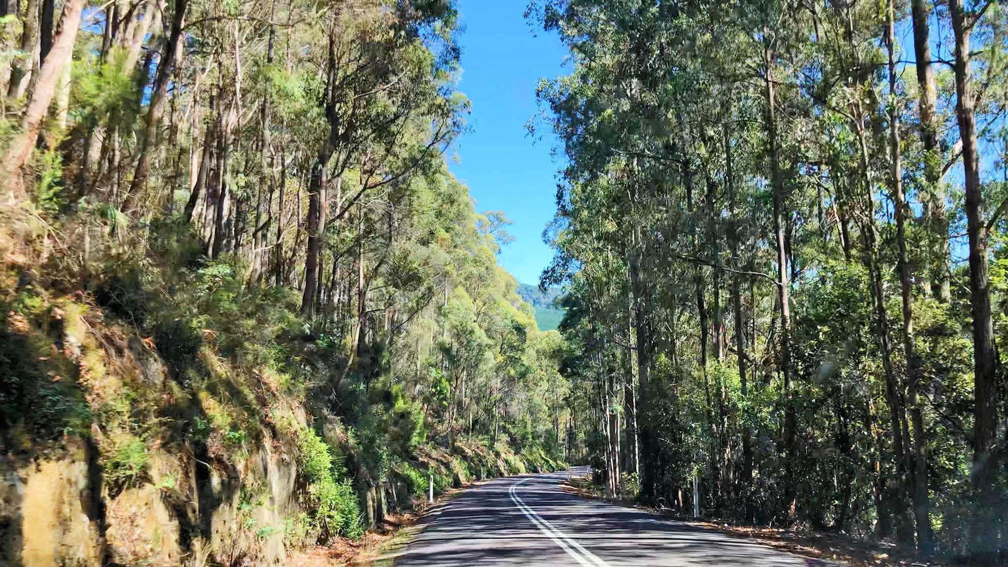 Дорога из аэропорта в отель на острове Тасмания