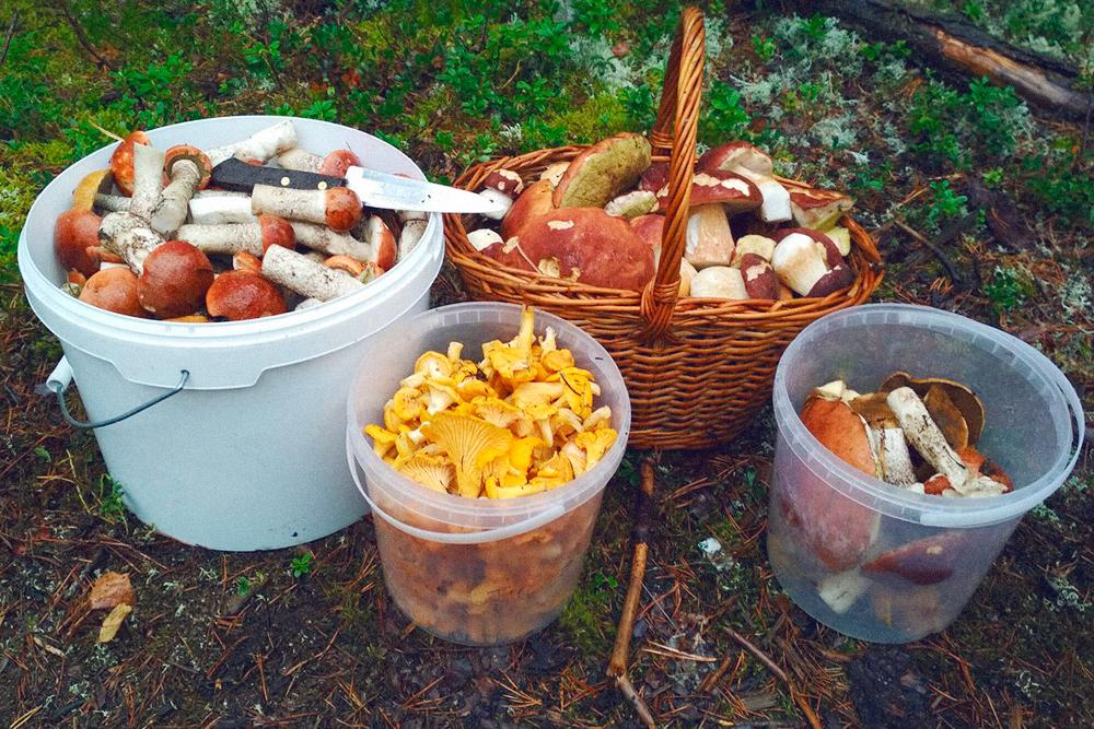 На этой фотографии показываю ассортимент — грибы рассортированы в разную посуду. Рядом нож, он как бы намекает: аккуратно срезала, очистила от мусора, обработала корешки