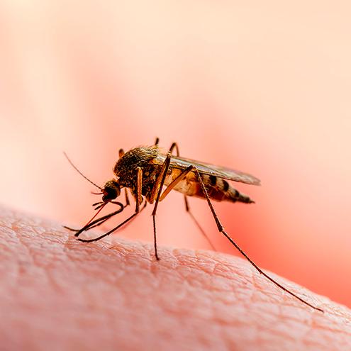 Комаров особенно много вечером у открытых водоемов, потому что для размножения им требуется вода. Днем в солнечную погоду они почти не появляются
