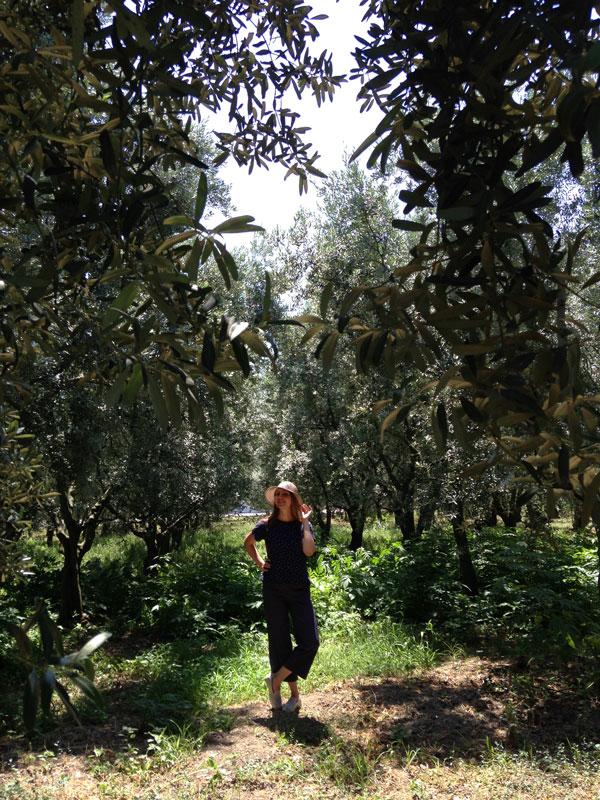 До оливковой рощи на автобусе и пароме — 2,5 часа