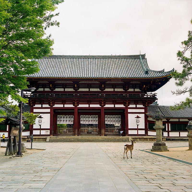 Нара — древняя столица Японии. В местном парке живет множество оленей, которые выпрашивают у туристов печенье