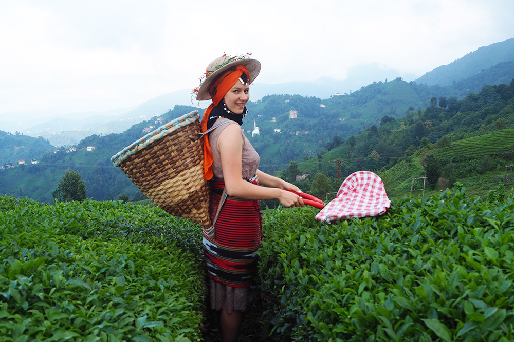 Девушки вHaremtepe Koyu, скорее всего, захотят устроить фотосессию втрадиционном турецком наряде за5лир или затеже деньги покачаться накачелях свидом начайные плантации. Именно наэтой плантации сделана фотография изначала статьи