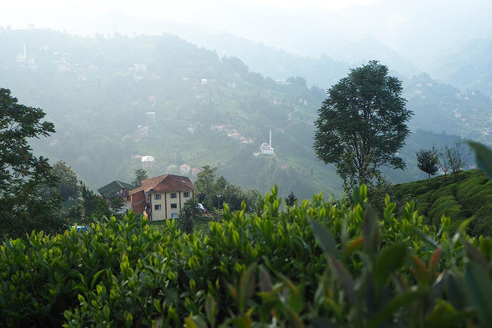 Здесьже можно выпить чаю, собранного наплантации, ивстретить закат