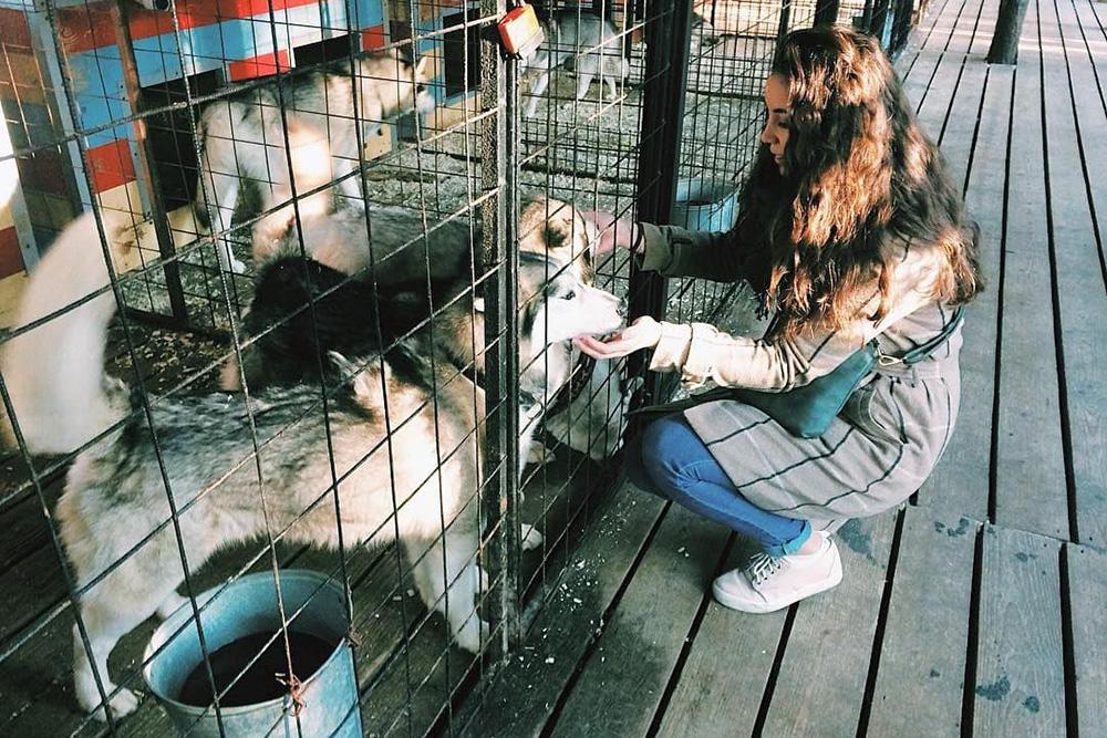 Хаски — самые добрые и приветливые собаки, радуются тебе как своему старому другу