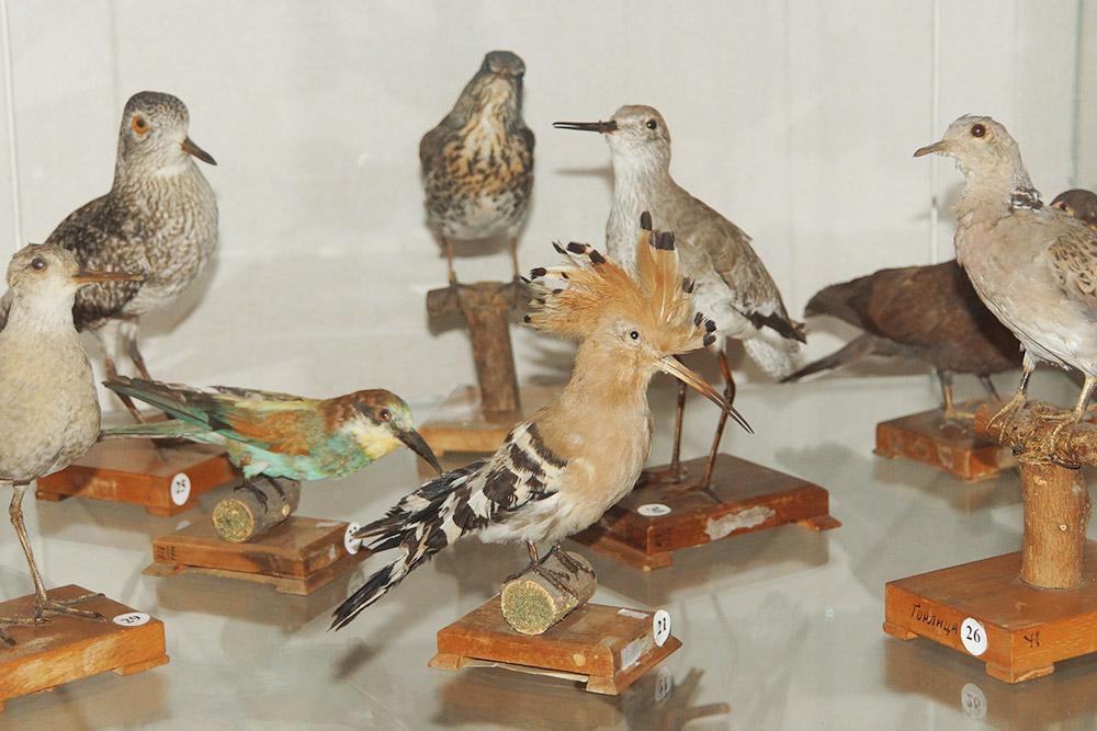 Все эти птицы обитают вокрестностях Тетюш
