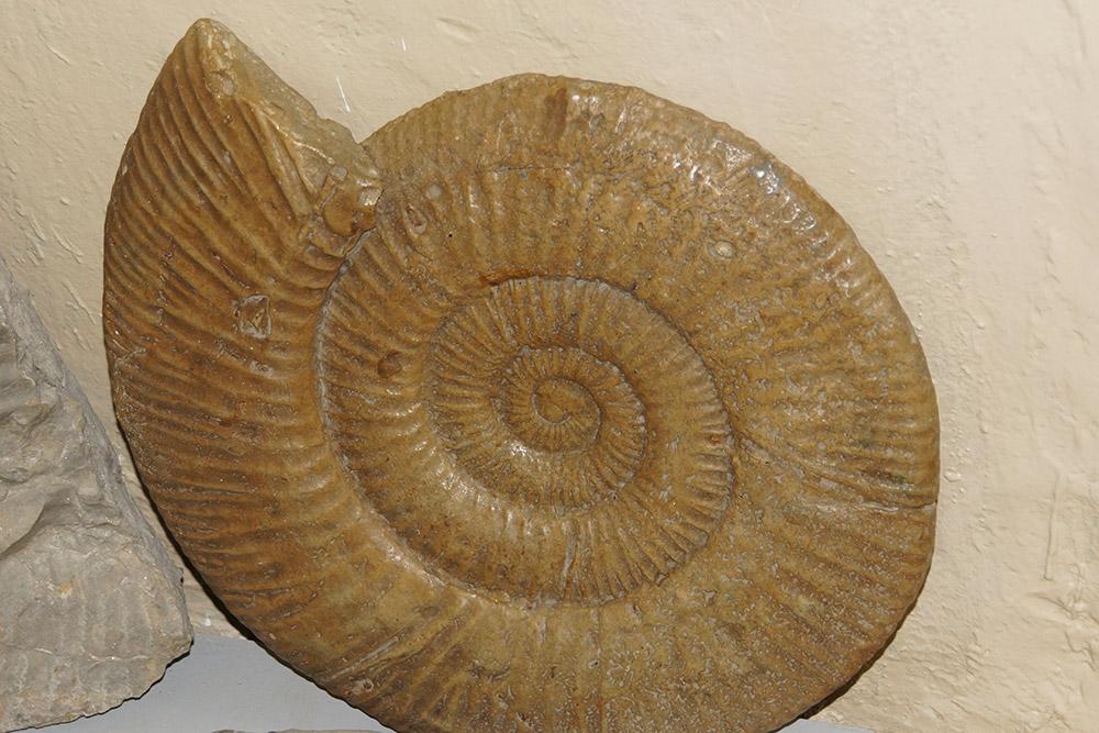 Это окаменелые останки аммонита — древней улитки. Такие продавались в&nbsp;сувенирной лавке музея по&nbsp;7000—8000&nbsp;<span class=ruble>Р</span> за&nbsp;штуку. Мы покупать не&nbsp;стали: понадеялись сами найти на&nbsp;берегу