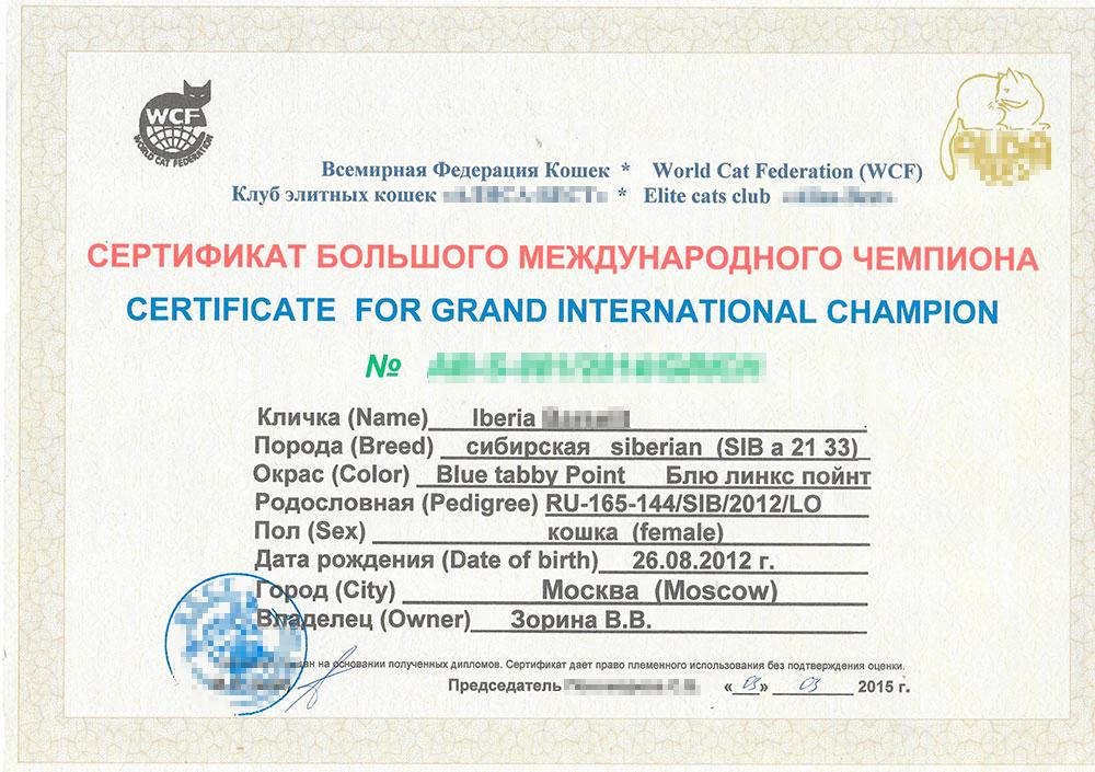 Так выглядит чемпионский сертификат