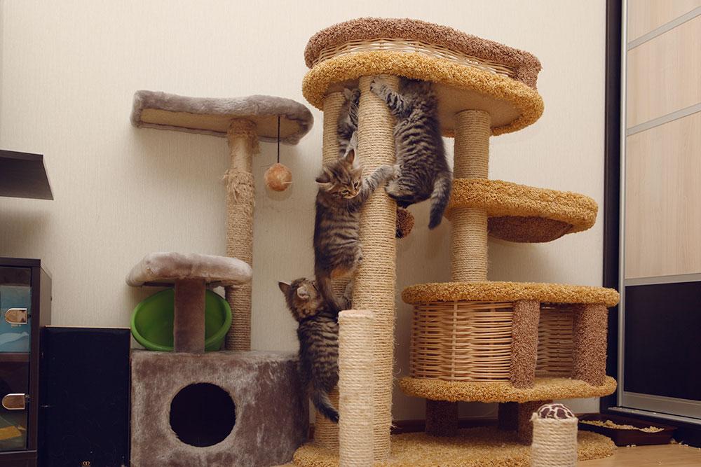 Котята с радостью лазят по комплексу