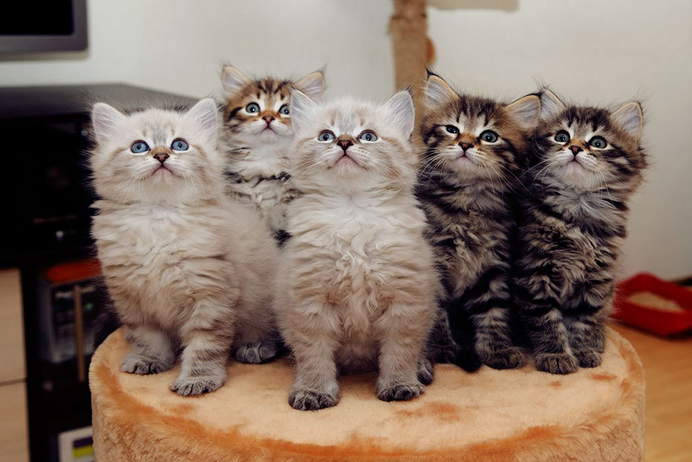 Это наши первые котята
