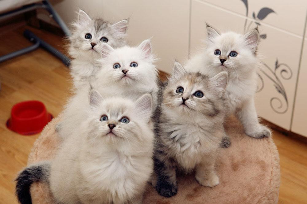 Все котята на этой фотографии разного окраса!