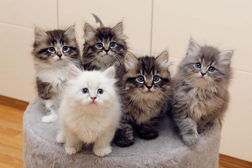 Эти котята сидели у меня на коленях, когда я писала эту статью