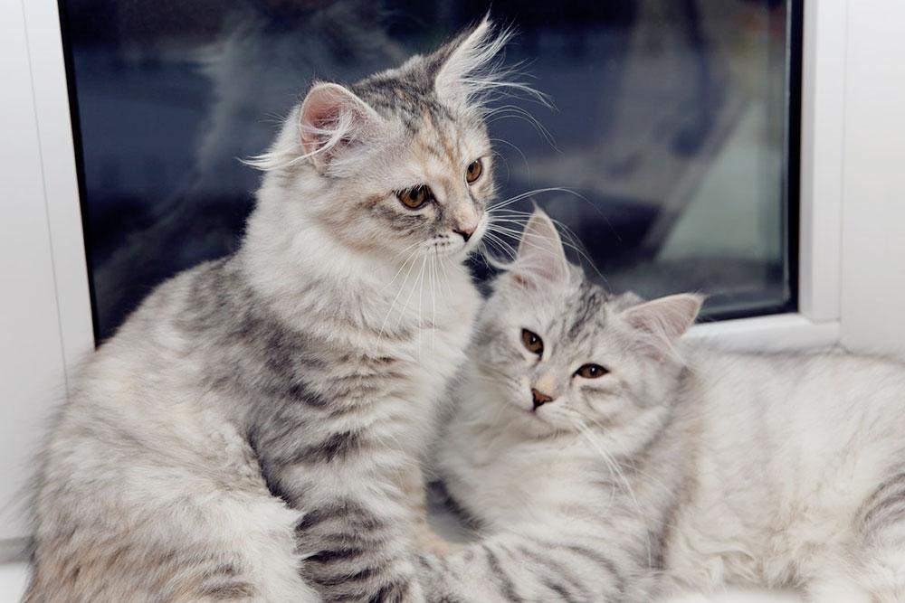 Эти кошки теперь живут подСиэтлом