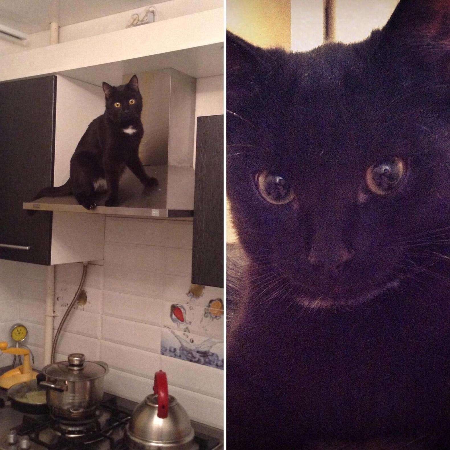 Чтобы вызвать доверие хозяина квартиры, покажите фотографии животных