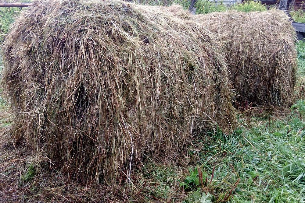 Рулон сена стоит 1000рублей. На зиму дляодной козы нужно 2,5таких рулона. Сено должно быть заготовлено всолнечную погоду, иначе оно может сгнить