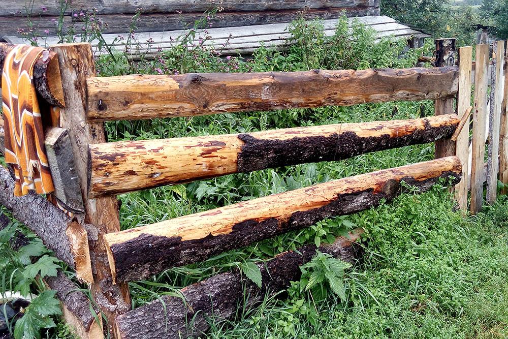 Наши грядки огорожены заборами высотой полтора метра. Козы живут в загоне, поэтому редко добираются до грядок. Но если им удается это сделать, мы криком выгоняем их подальше от посадок