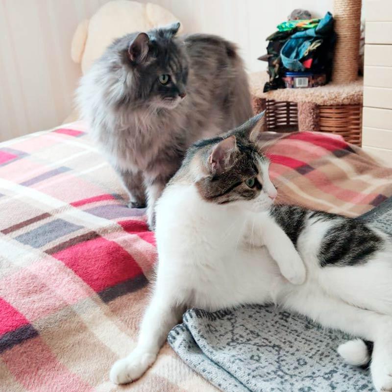 Вместе снами телевизор смотрят кошки. Старшая приехала еще изВладивостока, амладшую мыподобрали вКрасногорске